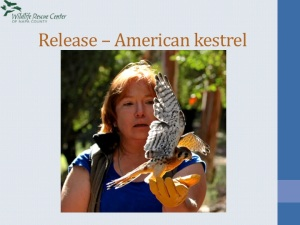 Thea releasing a Kestrel!