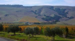 Carneros Region in Sonoma Valley!