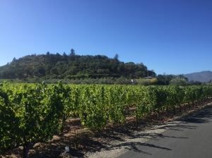 grapevines & hill
